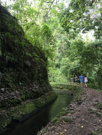 Beautifu Jungle walk